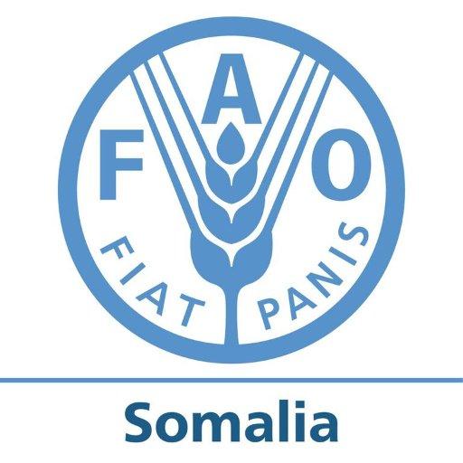 Muqdisho: Fursad shaqo- FAO-Fisheries Consultant, Mogadishu