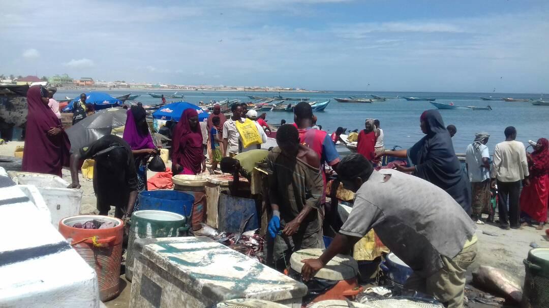 Qiimaha Kalluunka ee Boosaaso oo Hoos u Dhacay (Sawirro & Cod)