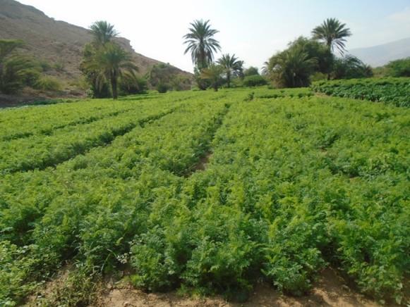 Beeraha & Beeraleyda Puntland: Sookabashada Beeraha iyo Dalagyada Beeraleyda Puntland (dhegayso)