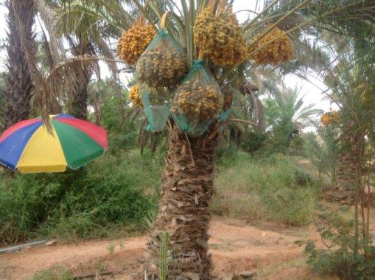 Mashruuca hormarinta Beeraha Timirta Puntland, maanta iyo berri (Puntland)
