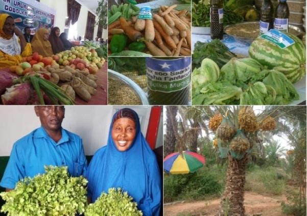 Beeraleyda Puntland: Xaalka Beeraha iyo Qaylodhaanta Abuurka Sumaysan (dhegayso)