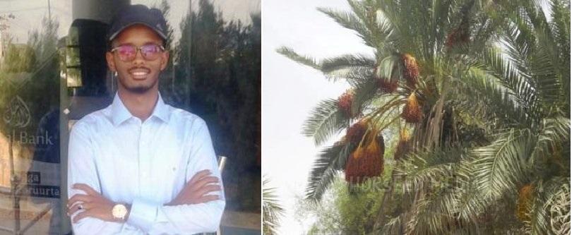 Tacabka iyo Maalgashiga Beeraha Timirta Puntland – Warbixintii 9aad (dhegayso)